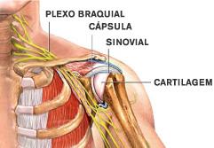Anatomia Ombro Clínica Do Joelho E Ombro Prof Gutierres