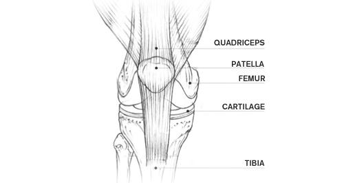 Knee anatomy clnica do joelho e ombro prof gutierres mdicos knee anatomy clnica do joelho e ombro prof gutierres mdicos e ortopedia ccuart Gallery